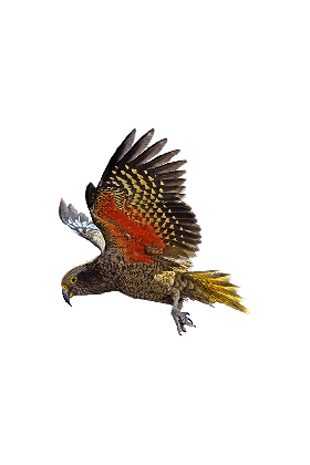 Papegaai & Zoo Koelkastmagneet Kea